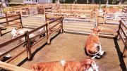 Real Farm screenshot 20